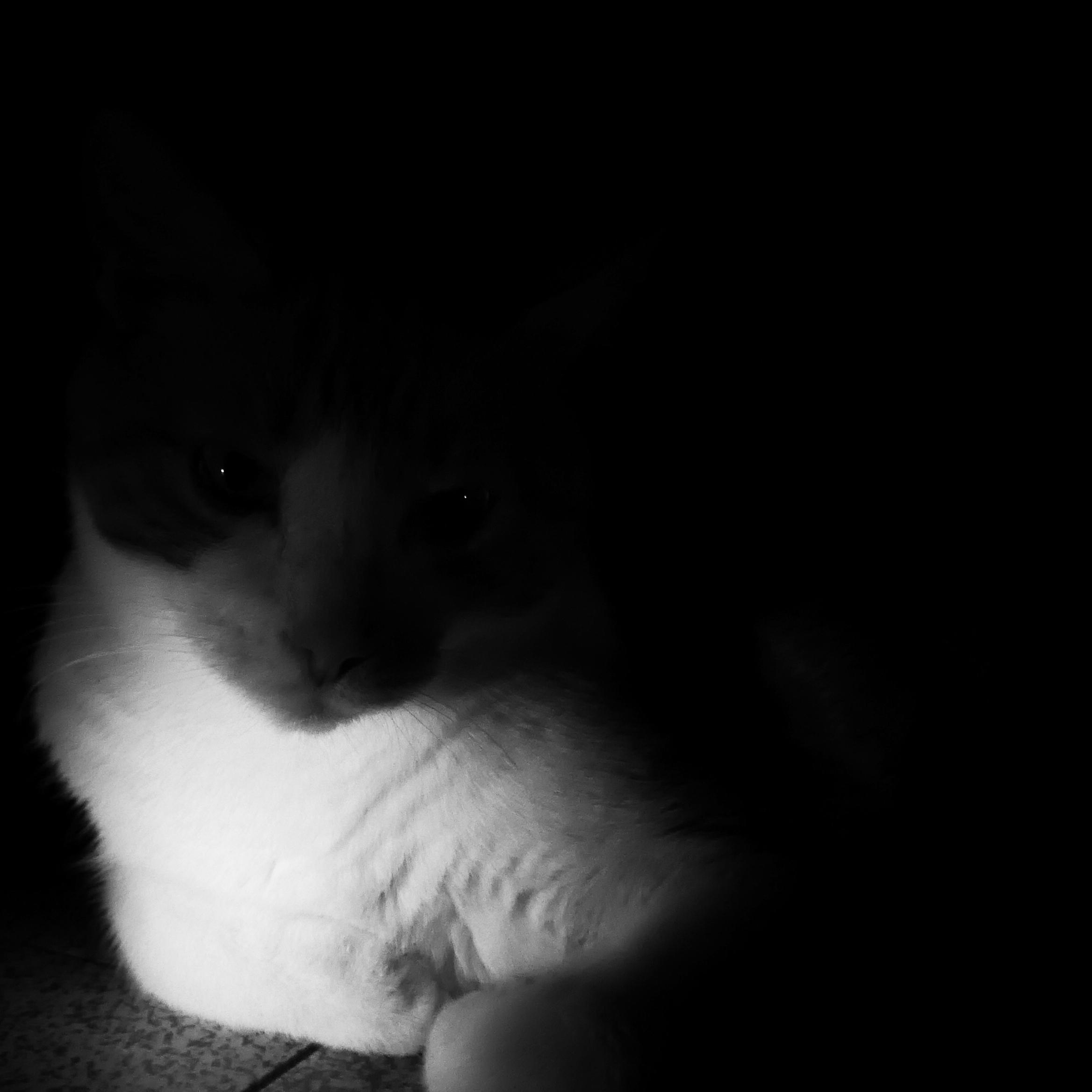 Chat-noir02