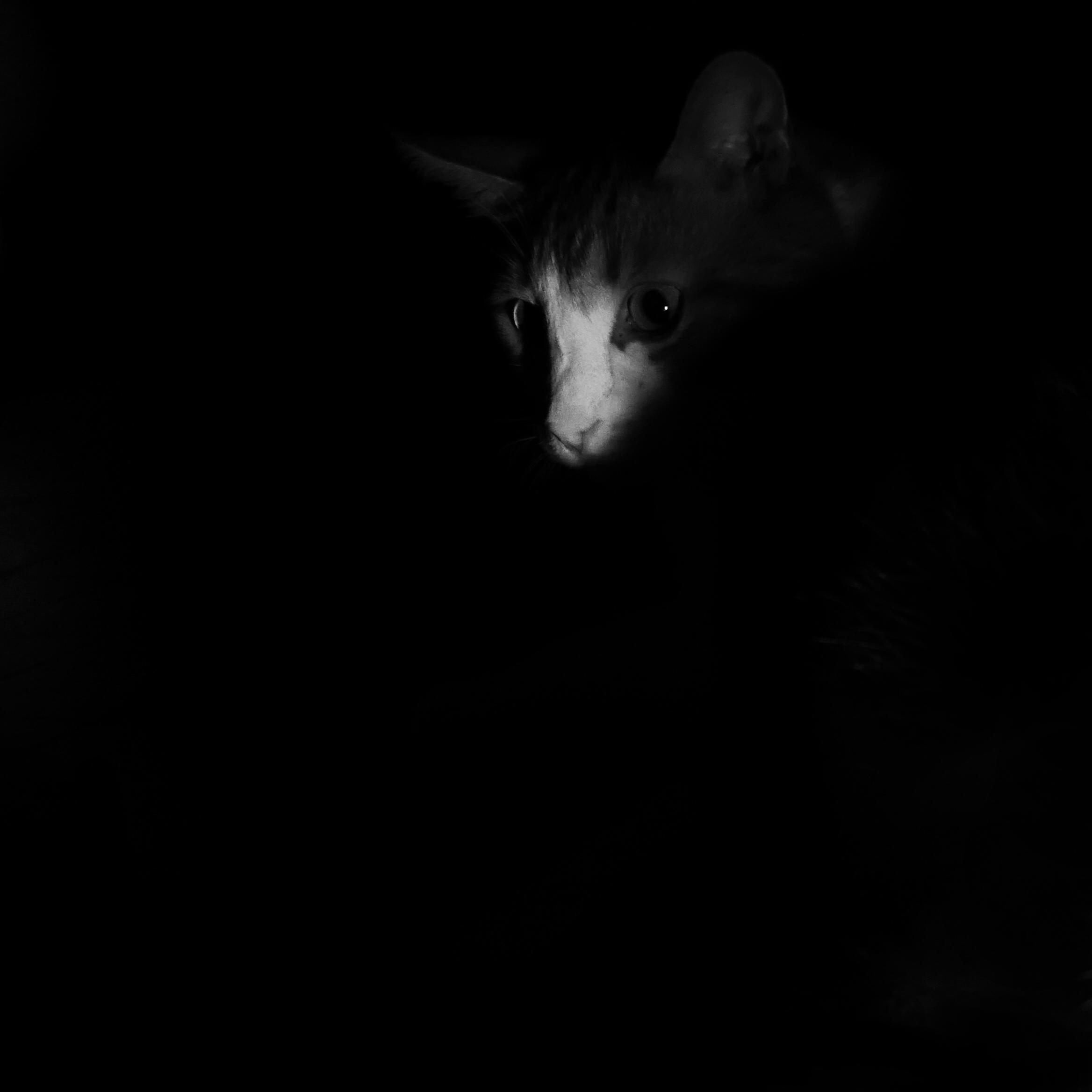 Chat-noir04
